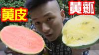 把最奇葩的西瓜全买回来!黄皮西瓜和黄瓤西瓜真好吃?