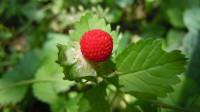 十二星座最喜欢吃什么水果,你能够认全吗?