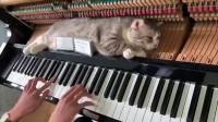 猫咪每天陪着主人弹钢琴,沉醉的样子真可爱,猫:钢琴按摩真舒服