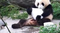 国宝爱上冰块,抱住不肯撒手,熊猫:难道我没有恋爱的自由吗?