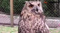 这..德国莱卡360度无死角旋转猫头..鹰