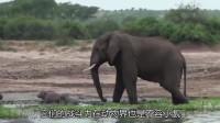 为什么大象死后最好别碰?外国男子不信邪,碰了一下,悲剧了!