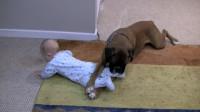 妈妈出去买菜,叮嘱狗狗照看小主人,没想到狗狗竟这么搞笑!
