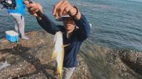 阿壮赶海钓到鱼群,钓到几种的海鱼,带回家给兄弟们炖汤喝
