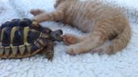 小伙喂乌龟蜗牛,看它吃不吃,结果令人大跌眼镜