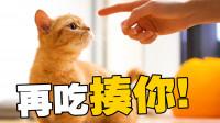 用四种肉勾引猫咪,看它先吃哪一个?橘猫:我全都要
