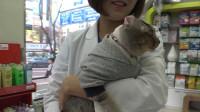 救助流浪猫:救助废墟中的流浪猫,看到猫咪幸福的样子后,感谢你好心人