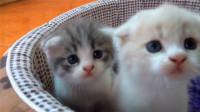 小奶猫试图越狱,身后的同伴使出卖萌技能:我们帮你拖住他