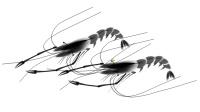 ps绘画004  一只大虾