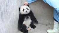 大熊猫:这么脏,不知道我爱干净吗