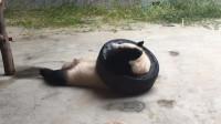 大熊猫:谋杀国宝了,你还看