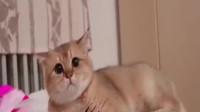 猫咪撒娇卖萌,看得我都想去养一只了。