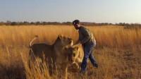 站在食物链顶端的男人,把狮子当宠物养,新的草原霸主