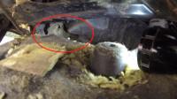 兔子被困在汽车的发动机里,长达几个小时之久,幸好被救