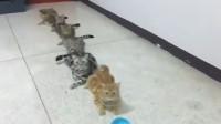 猫咪排队领小鱼干,看到最后一只我笑喷了,大家忍住