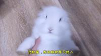 小伙养了只兔子,因为不粘人,陷入苦恼