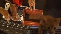家里突然多了五只小橘猫是什么体验?吸猫人士请回避