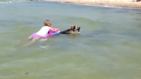 暖心!小萝莉游泳玩累了,德牧:来,我拉你上岸