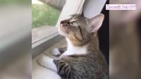 可爱猫咪,猫咪逗比时刻