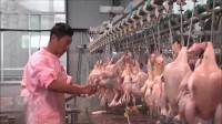 直击德国全自动杀鸡生产线,鸡:感觉身体被掏空