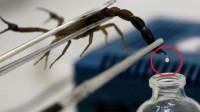 世界上最贵的液体,居然是蝎子毒?1升价值7300万!