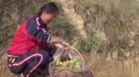 农村人早晨的生活之耕地,种土豆
