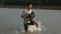 这种野生蚝不多见了,小池跳入海里捞上一大堆,桶都装不下了