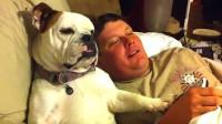 盘点最有趣的10大狗狗犯傻瞬间视频,这不是条狗这是个傻子