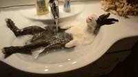 主人给兔子洗澡,中途去接个电话,回来就看到这一幕!
