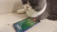 胖子喵遭小奶猫嫌弃脸大,打电话给整形医院,却是遭客服调戏!