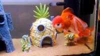 小伙DIY海绵宝宝主题鱼缸,成品也太漂亮了!