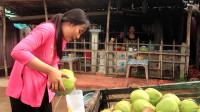 水乡女孩 推着车去卖椰子