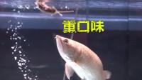 老鼠VS金龙鱼,老鼠被生吞,金龙也是真不挑食!