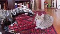 自从铲屎官带玩具恐龙回家后,猫咪就变这样了,铲屎官乐了