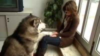 为什么养狗?现在有答案了吗?