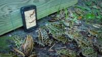 男子给青蛙看手机,刚开始还哈哈大笑,下一秒悲剧了