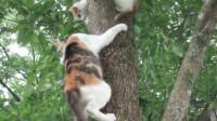 小猫爬上树后下不来,猫妈妈耐心教小猫咪下来,画面十分温馨