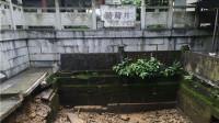 千年葡萄井毁于地震正宗葡萄井凉糕或绝世