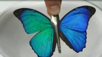 蝴蝶翅膀泡入酒精会有什么变化?老外做了实验,神奇的现象发生了!