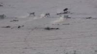 鬣狗坏事做尽,终于遭到了天谴,居然被非洲野犬五马分尸