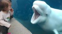 白鲸老喜欢作弄小孩,没想到这次让小姑娘恶搞,一个动作就让白鲸被气到变形!