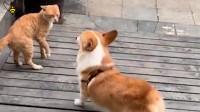 狗子:打不过我吧,就是要挑衅你!