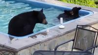 黑熊闯入民宅泳池,只为解暑纳凉,网友:比人会享受