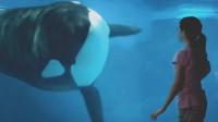鲸鱼一改往日凶猛形象,变身呆萌小可爱,水上表演赚足粉丝