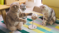 让猫变聪明,铲屎官制作了这个:猫智力开发器!