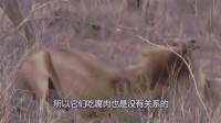 狮子和鬣狗就像天生的仇敌,那为何狮子捕杀鬣狗后,不吃鬣狗呢?