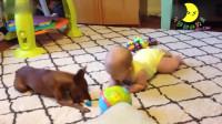 狗子和宝宝玩耍,大家都是爬爬小可爱