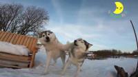 狗子小剧场:狗子面带微笑给同伴一拳,同伴气得不行
