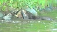 野钓总是有意外发生,听到水边有动静,发现了罕见的一幕!