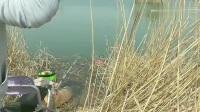 野钓总是充满惊喜,上一竿还是大板鲫,下一竿就上了条鲤鱼!